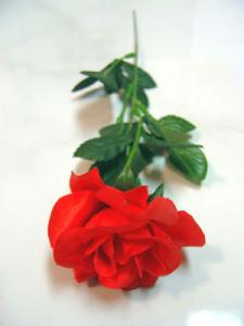 silk_rose